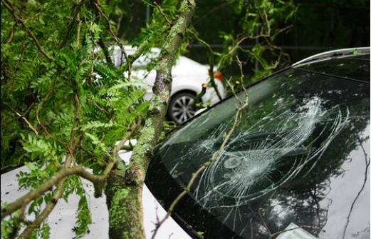 A fallen branch cracked a car windshield