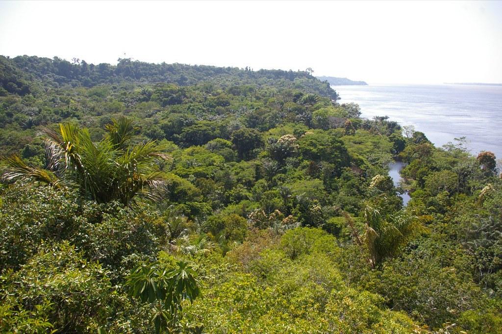 Forest Regrowth Amazon deforestation rainforest