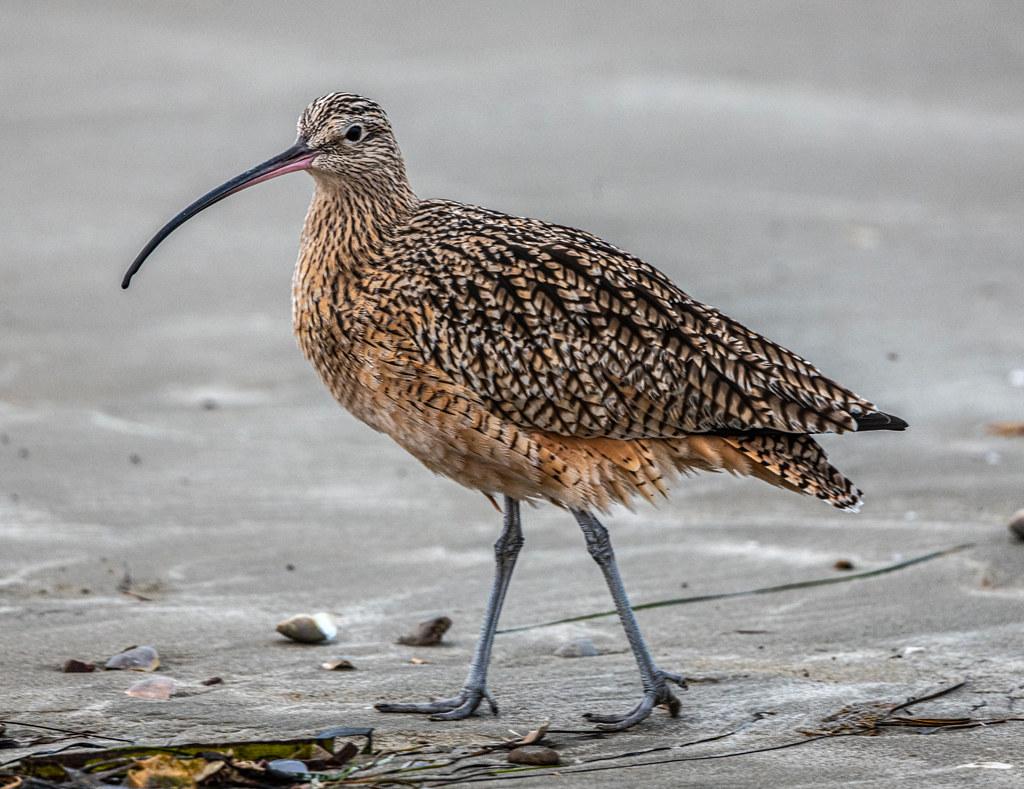 bird migration climate change