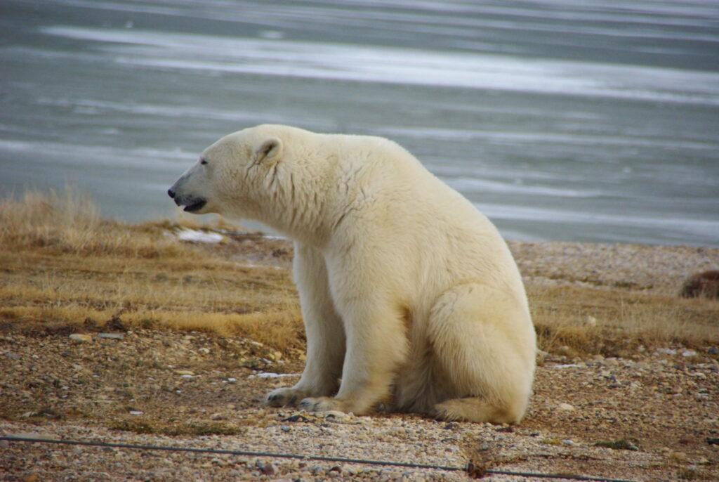 shrinking sea creates ecological trap