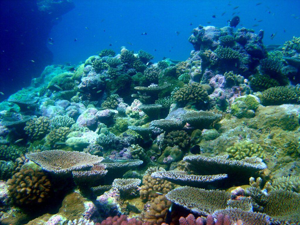 heat resistant coral