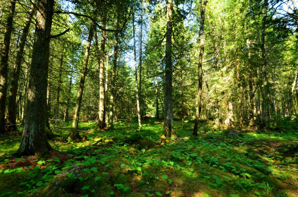 family forests can help meet the climate challenge