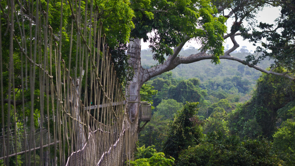 rainforests continue to disappear