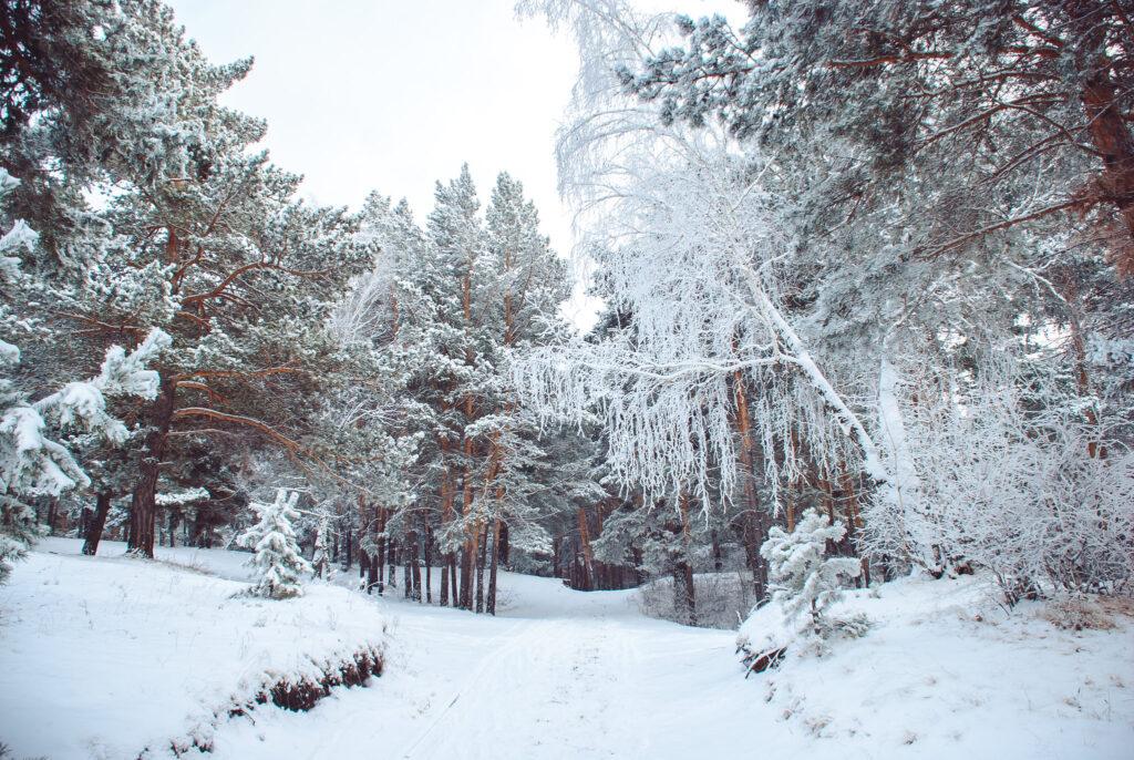 Record temperatures recorded in Siberia