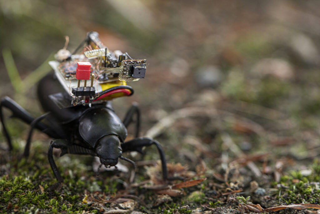 Developing tiny cameras for insects