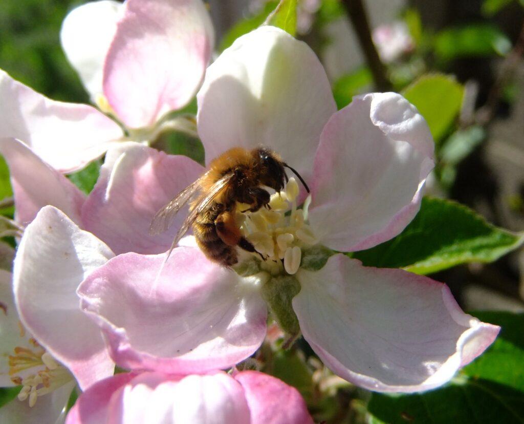 Pollinator decline threatens food security