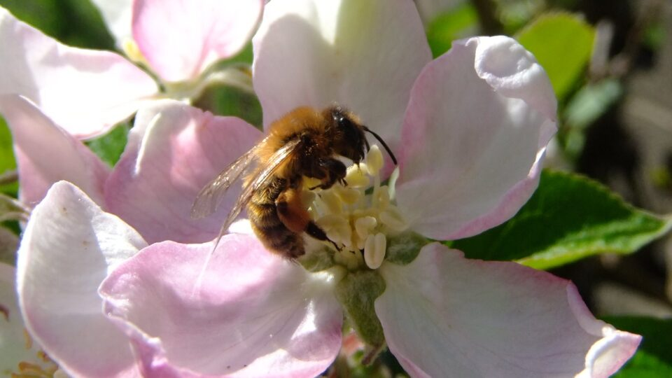 Pollinator decline threatens food security