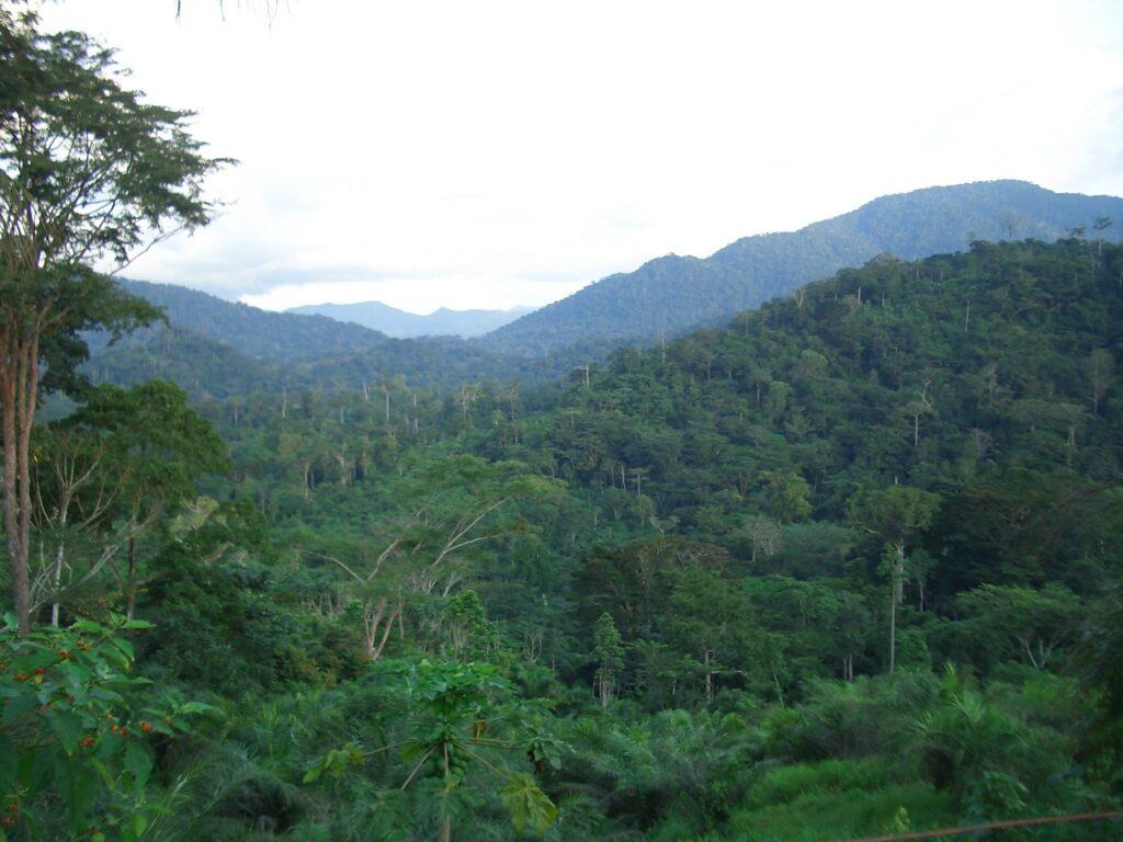 Preserving biodiversity in Cameroon