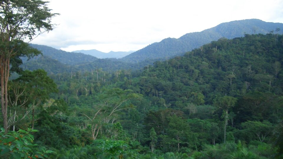 Preserving biodiversity in Cameroon