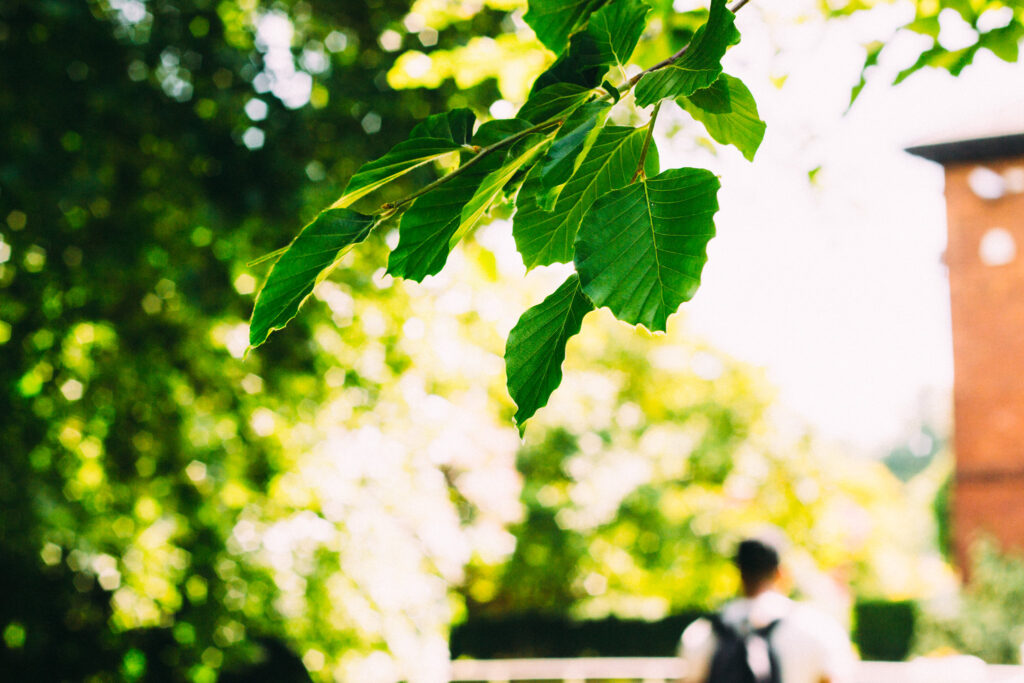 benefits of hacking photosynthesis