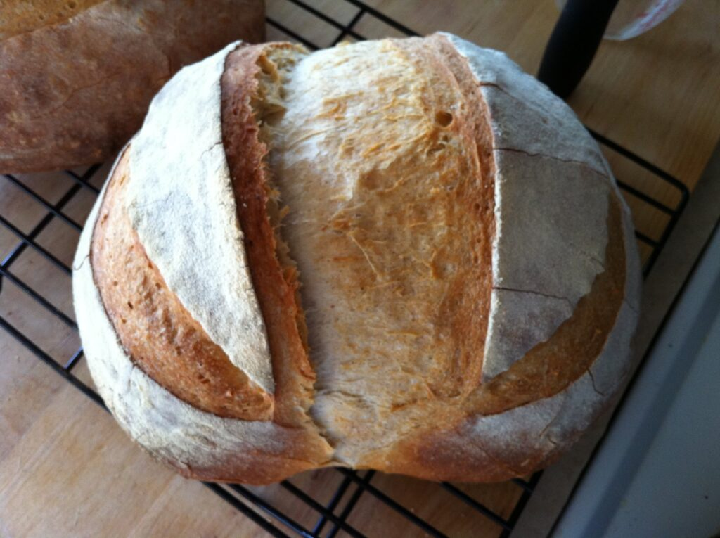 Exploring gluten sensitivity