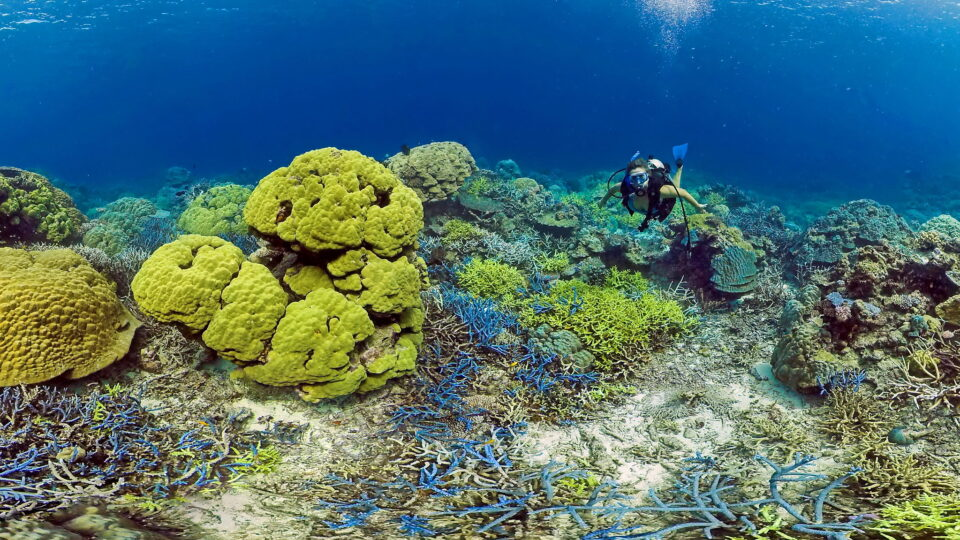 Saving corals with cooler water