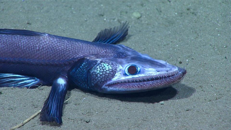 the deep sea is warming