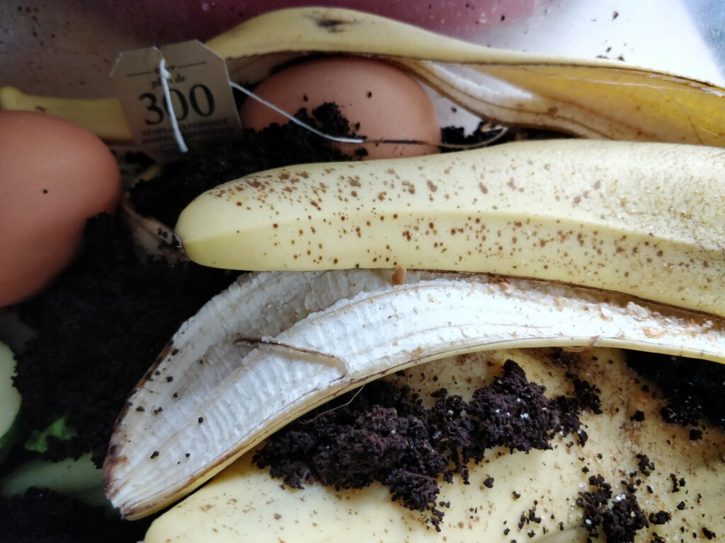 Turning food waste into wearables