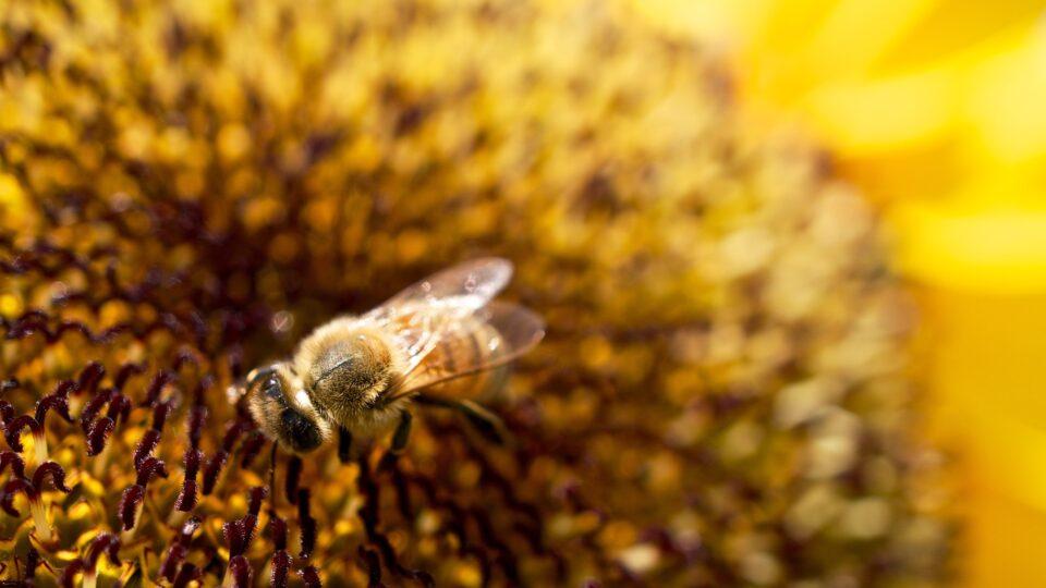 bees threatening bees