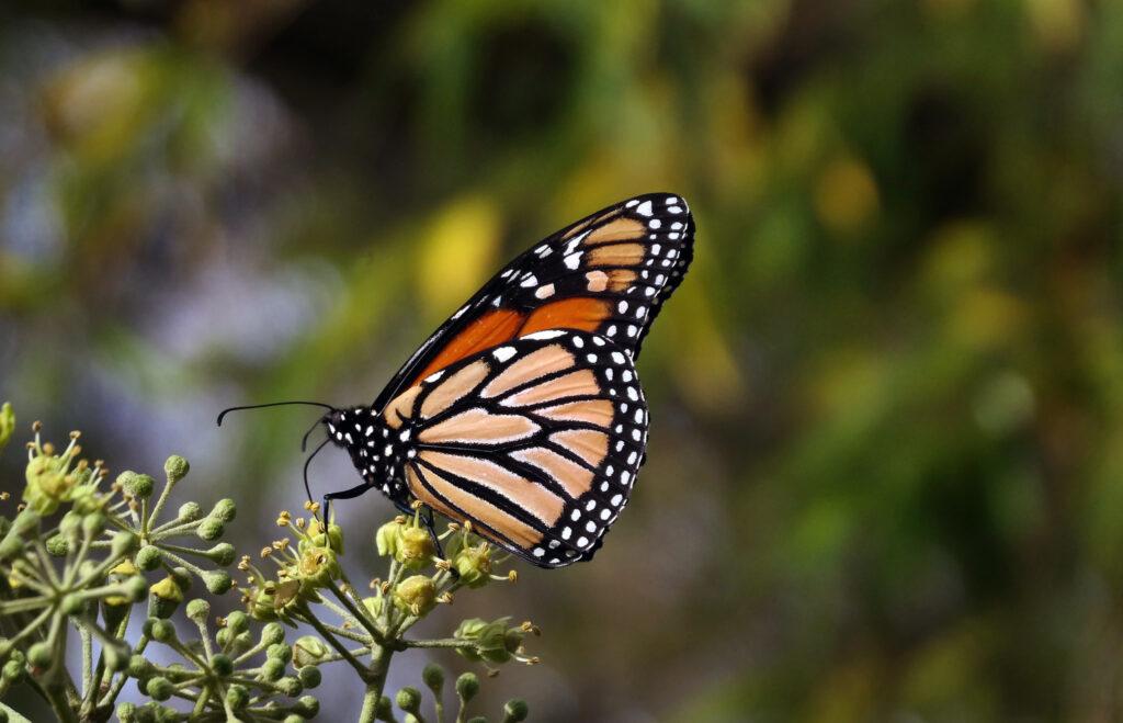 global wildlife declining rapidly