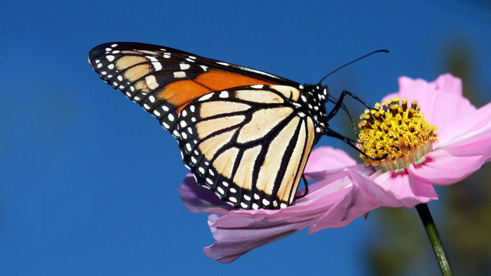 The impact of non-native plants on insect decline