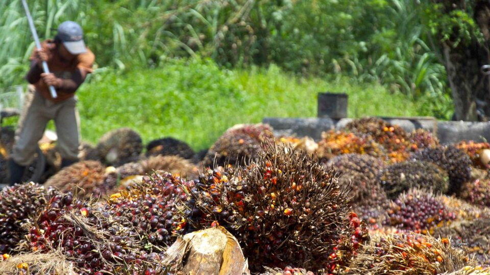 A possible replacement for palm oil