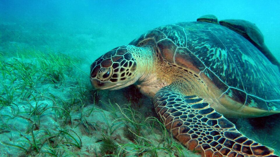 Climate change poses a serious threat to sea turtles
