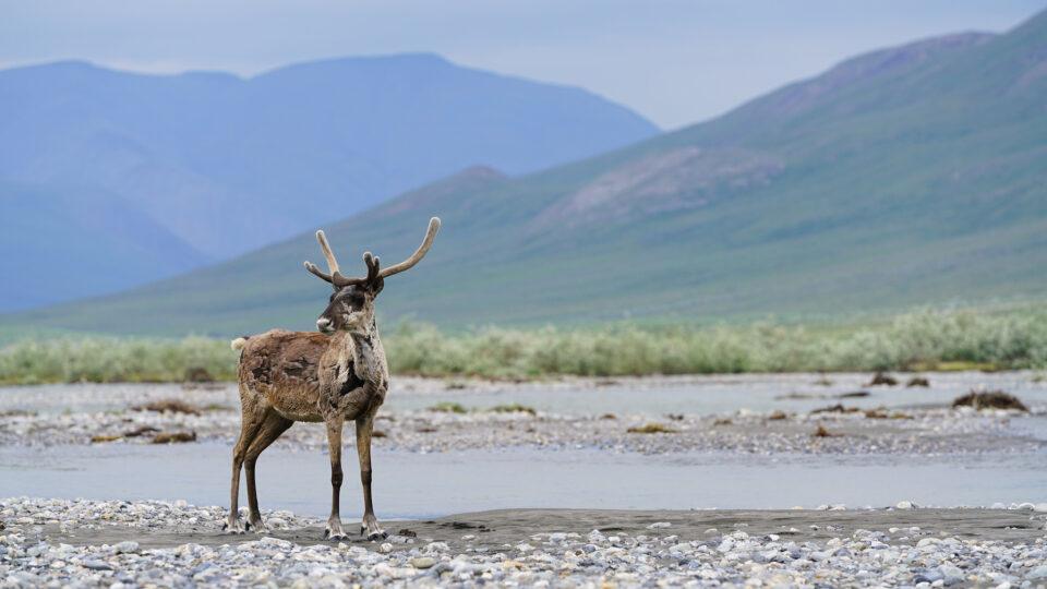 Arctic drilling plans fall through
