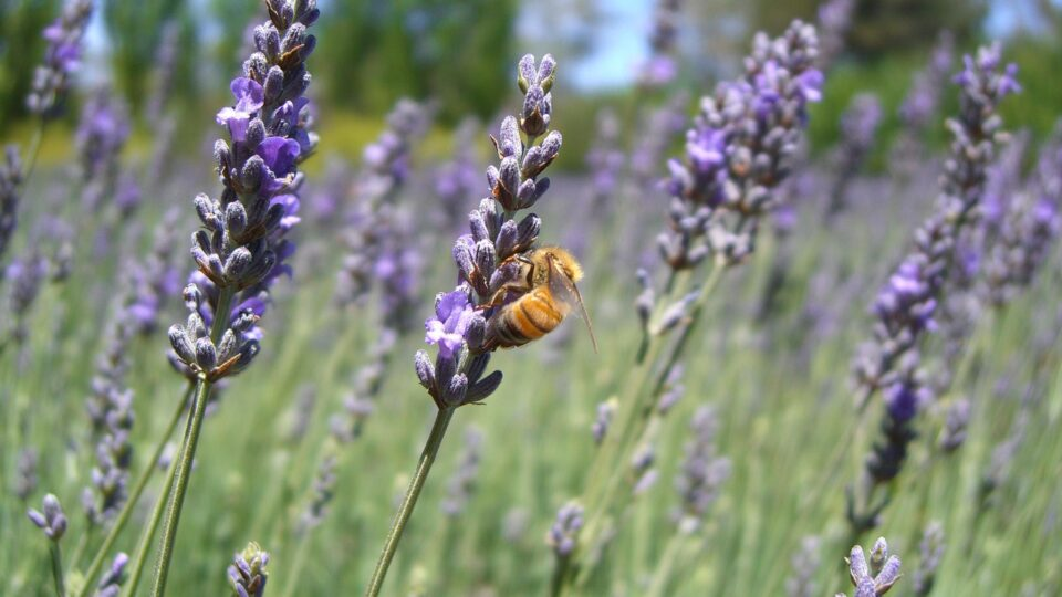 The decline of bees is not getting enough attention