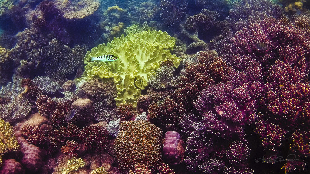 Utilizing exploratory technology to help corals
