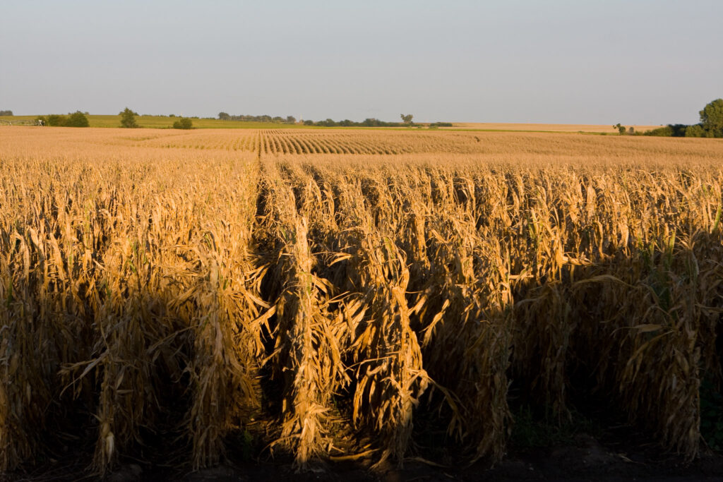 Erosion is claiming the corn belt's topsoil