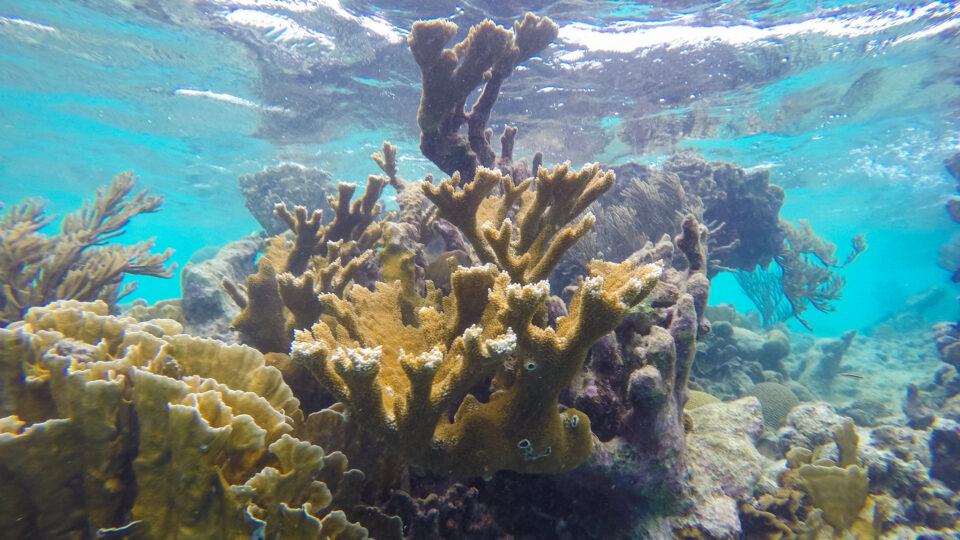 Toxic sunscreens are killing corals