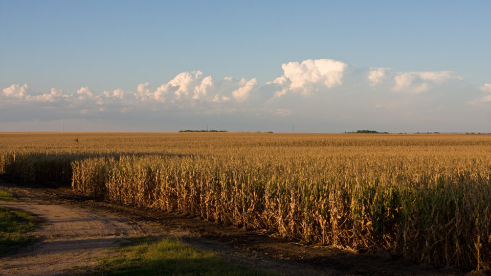 Using corn waste to clean water