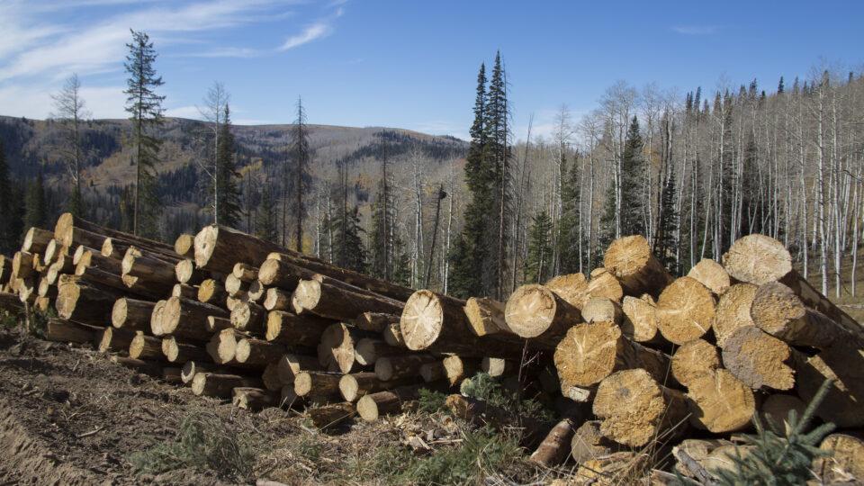 Could wood solve the plastics problem?
