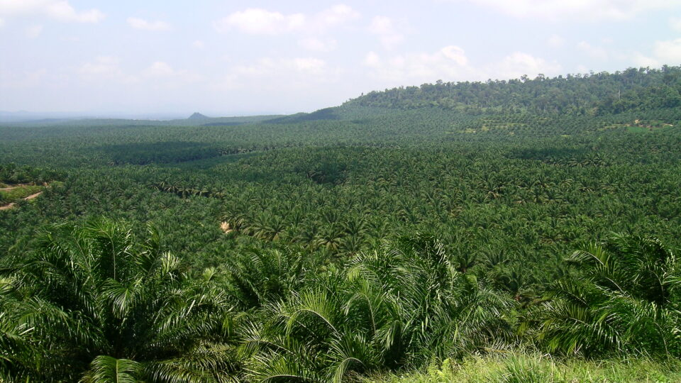Sustainable palm production is possible