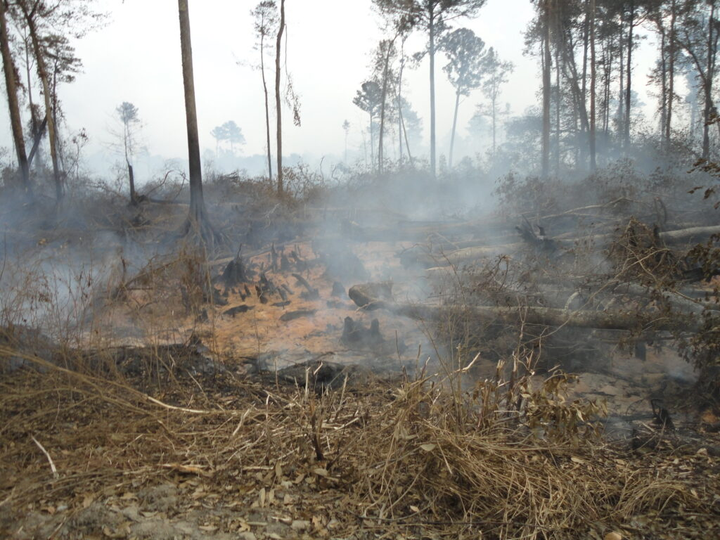 New tool in the fight against zombie fires