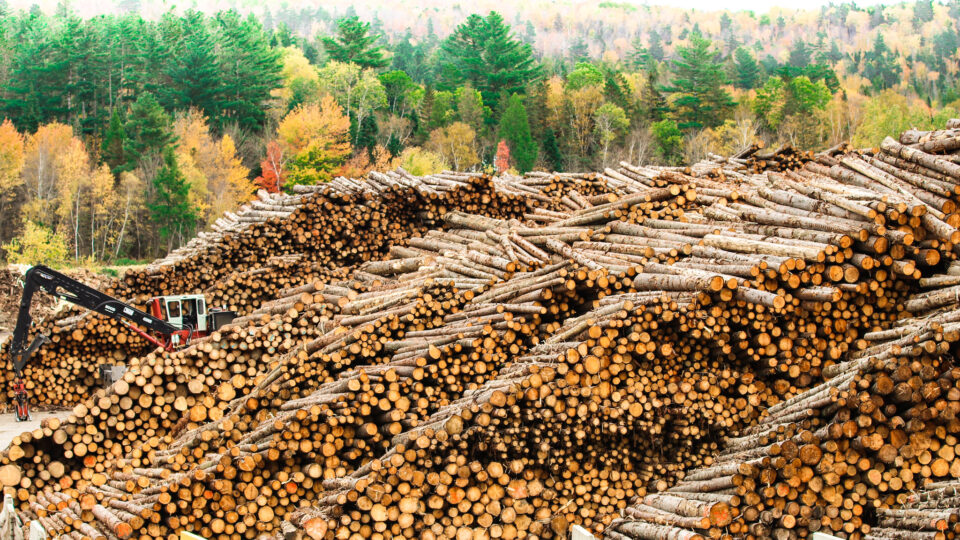 Making eco-friendly transparent wood