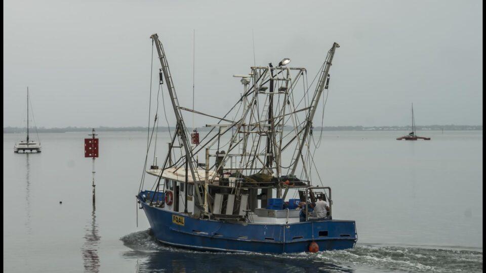 Trawling devastates biodiversity
