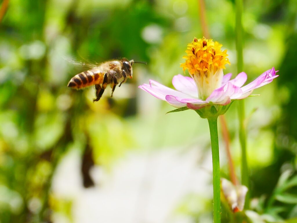 A new technology that can protect bees from pesticides