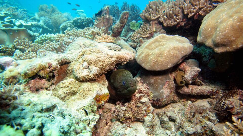 Could artificial ocean alkalinization help offset reef acidification?