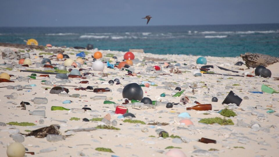 The majority of ocean litter collected around the world is from takeout food