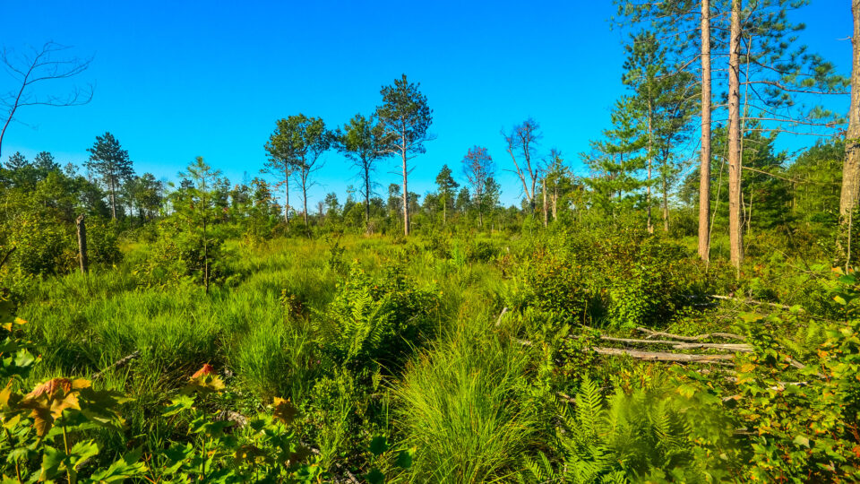 Peatlands play a significant role in greenhouse gas emissions