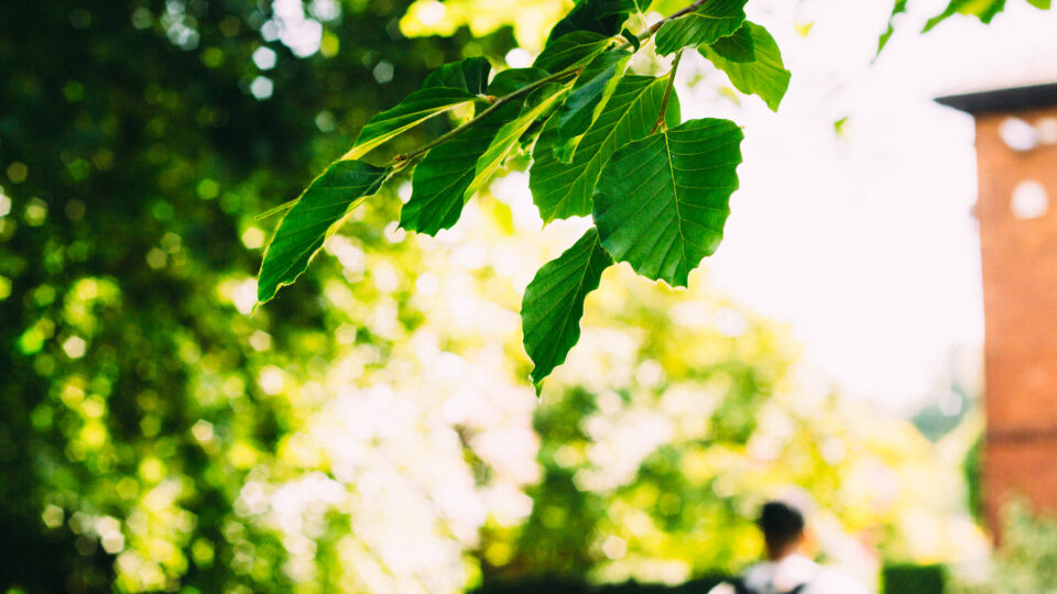 Artificial photosynthesis could dramatically improve our ability to power society cleanly and efficiently.