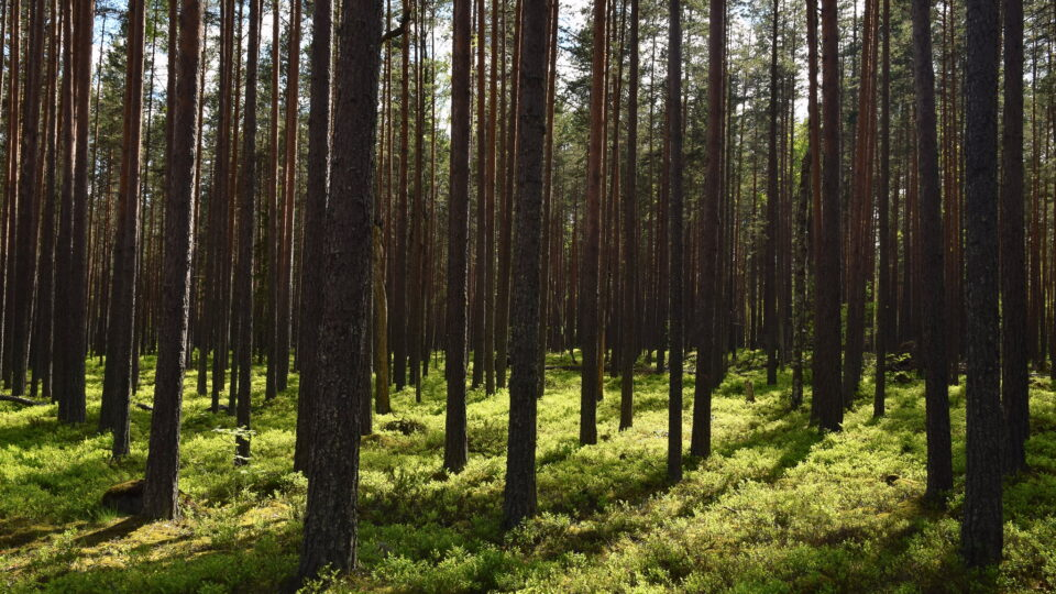 Russia's massive forests have enormous potential for impacting climate mitigation