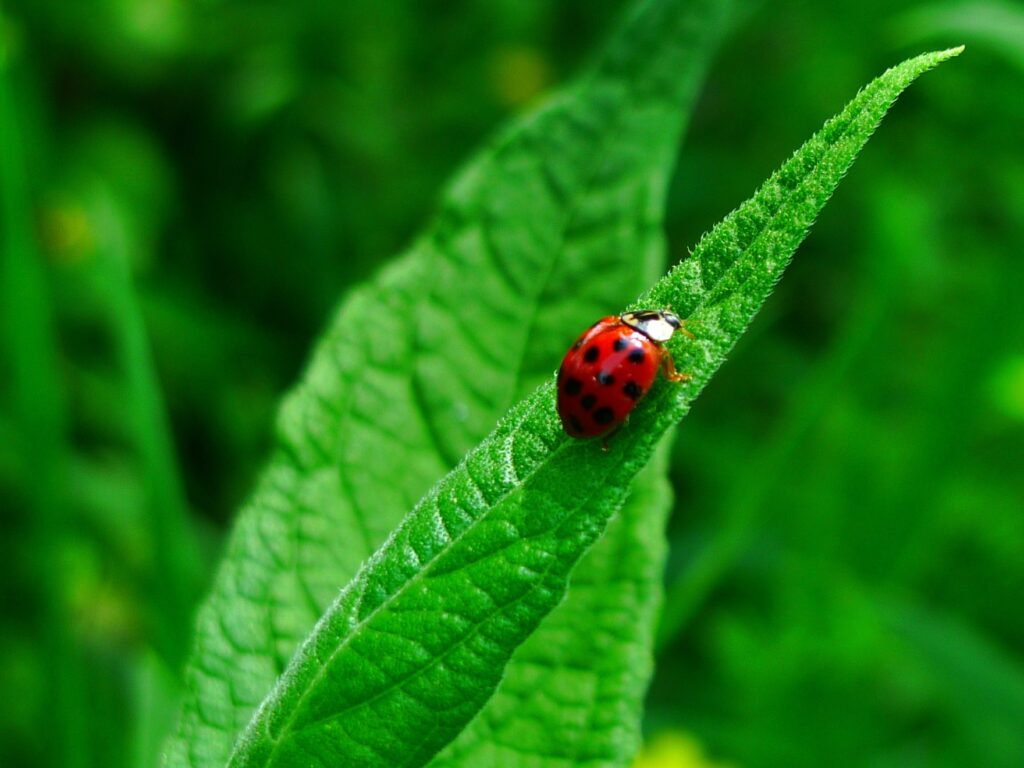 Harnessing the smell of fear to drive away pests