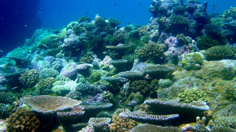 The ecosystem services of coral reefs