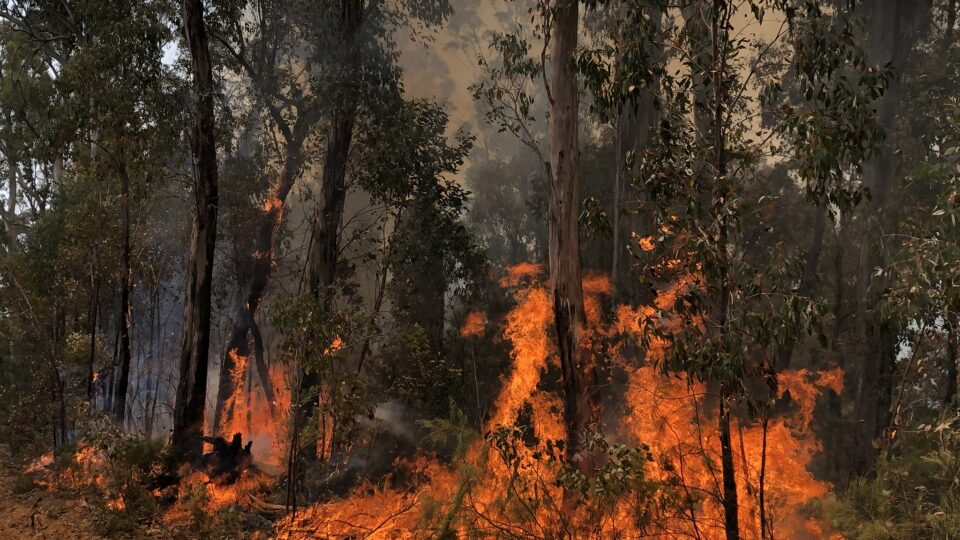 Wildfires had a bigger impact on climate than the pandemic lockdowns