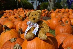 Bear on a pumpkin
