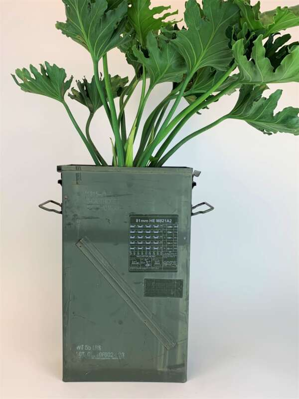 Philodendron Hope Selloum - Goat City Plant Design & Delivery