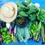 harvest_hat