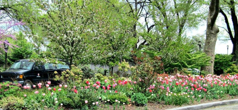 Gracie Mansion Tulip Garden