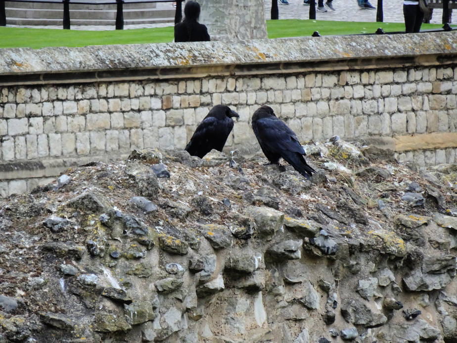 The Tower Ravens