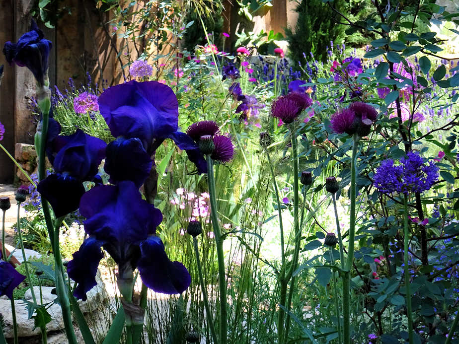 Iris at the Chelsea Flower Show