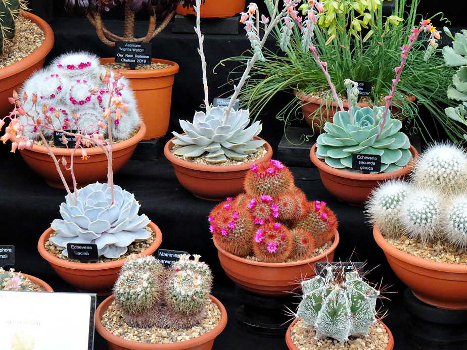 Gold Medal Winning Succulents at the Chelsea Flower Show